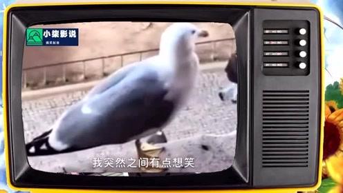 搞笑视频:这只鸵鸟有点特殊啊