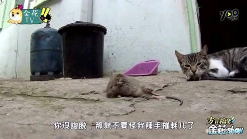 四川方言爆笑小动物搞笑配音,真人版猫和老鼠