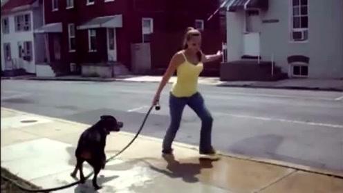 罗威纳犬10大搞笑视频集锦