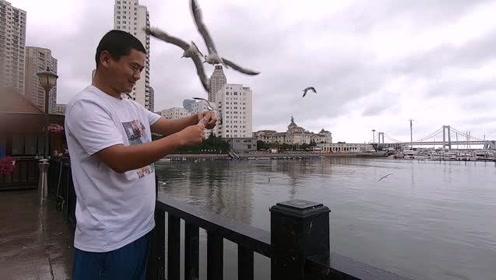 第一次来到东北,大连海边可以喂海鸥,可惜沙滩上没有泳装美女