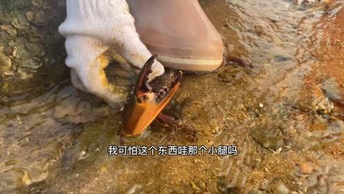 赶海收获很多猫眼螺,还被章鱼攻击吐了一口墨!新裤子都脏了