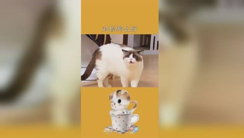 我对你那么好、没想到你背后竟然这样说我小猫咪能背着你干嘛呢创作灵感萌宠嘉年华萌宠猫 #百万视友赐神评