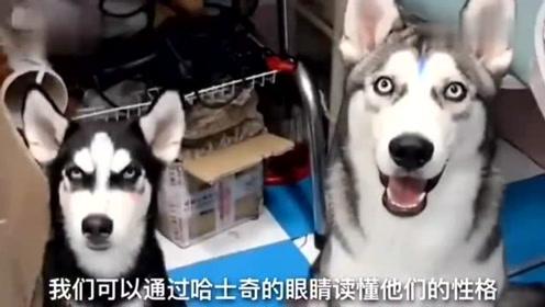 搞笑视频:现在的广告才能骗,还怕上火喝王老