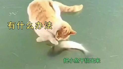 动物搞笑  爆笑配音  黄猫配小鱼干