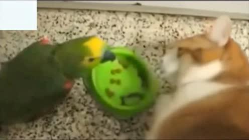 动物搞笑视频。歪果仁真会玩,笑的停不下来,