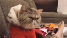 主人不给猫咪吃小鱼干,猫咪的反应让人哭笑不