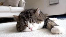 猫大婶呆在任何地方都能睡着,这个本领我也想拥有