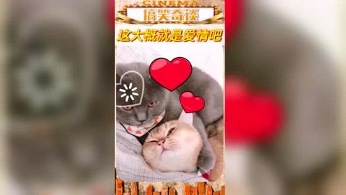 这是爱情吗。搞笑 动物
