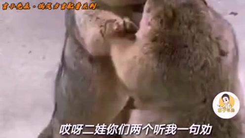搞笑方言:重庆话版动物配音,肚儿都给笑痛了