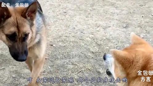 搞笑四川方言动物配音:打架就打架嘛,怎么要