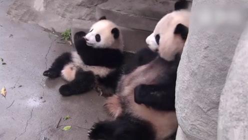 熊猫从宝宝嘴里抢苹果吃,镜头记录搞笑画面,