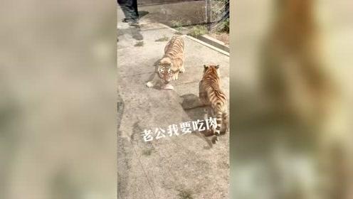 母老虎为了吃肉,居然对老公撒娇,结果太搞笑