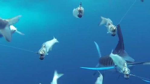 没看过这个钓鱼视频,你一定不知道钓鱼有多刺激