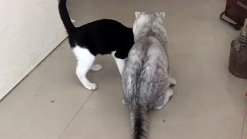 刚认识的猫咪,感情非常的好,没有十分钟就打
