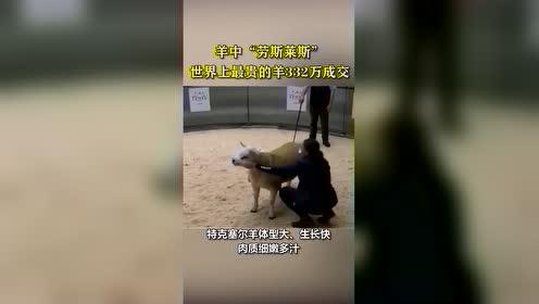 """#不懂就问#世界上最贵的羊332万元成交  这只特克赛尔羊名为""""双钻"""",由三位农场主合伙买下。为啥贵?看视频"""