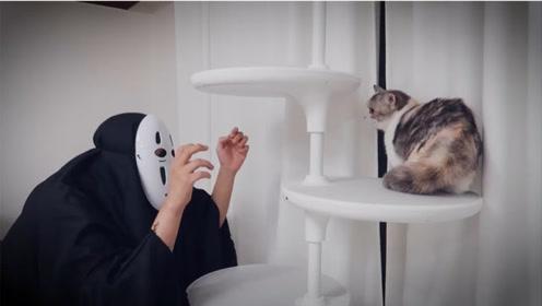 主人扮无脸男,家里的猫咪看到后,反应太搞笑