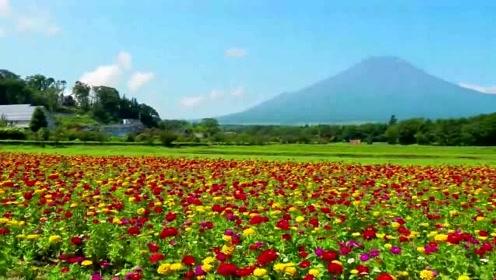 漫步于日本山中湖花之都公园