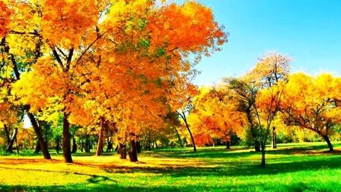 一首怀旧情歌《伤感的秋季》