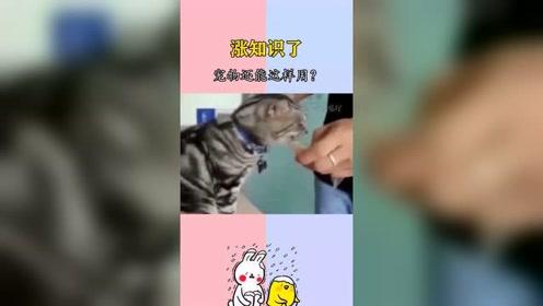 搞笑视频:宠物还能这样用?涨知识了!