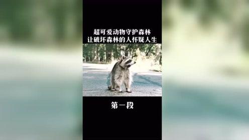 各种可爱动物,合力保护森林,轻松搞笑超治愈