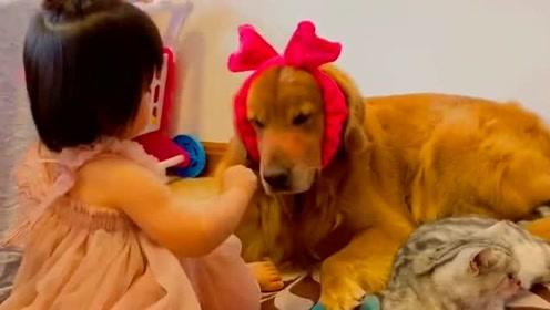 人类幼崽早期驯服工具猫狗的珍贵视频,宠物和孩子日常,有你陪伴的每一天!
