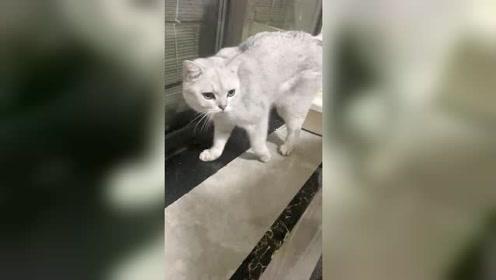"""团妈家的猫咪真是""""傻得可爱"""",瞧它的做法令团妈无语了"""