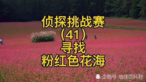侦探挑战赛(41),寻找网络热门视频粉红色花海