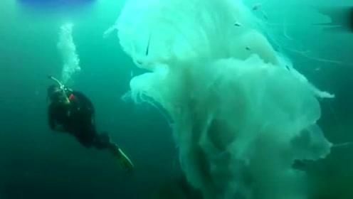 潜水员在深海拍摄到,一条15米长的巨型水母,场面惊魂刺激!
