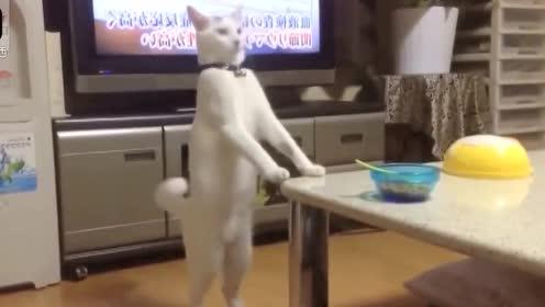 超搞笑的动物视频,第二个猫怕是成精了吧!