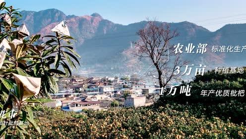 攀枝花枇杷宣传片