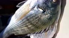 """小伙赶海钓鱼,虽然弄坏了鱼竿,但是这收获,让人看着""""眼馋""""!"""