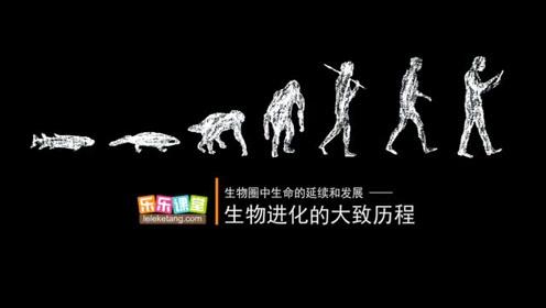 八520快三生物下册七单元第3章 生物的进化 2.生物进化的历程