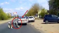 两只狗狗横穿马路,其中一只突然撞到汽车上,下一秒谁能憋住不笑