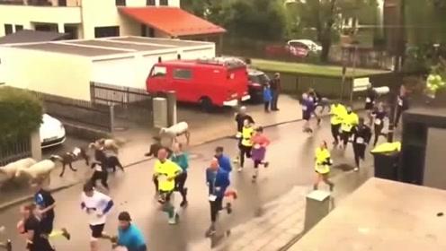 摄像师跑的比运动员快爆笑体育强势来袭,运动场上捧腹大笑