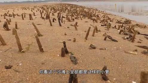 """大庆赶海捡漏、遇到一片沙滩都漏出""""呼吸孔"""",礁石区海鲜太多了"""