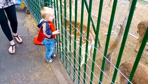 宝宝遇上顽皮的动物,结果搞笑