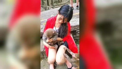 现在猴子都不正经了,见到美女就往怀里钻