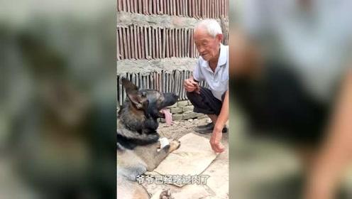 当初老人从狗贩子手中救了一条狗,后来出门遇危险,狗狗不顾一切舍身救主