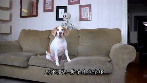 搞笑动物:狗狗看恐怖片,一个骷髅突然在身后