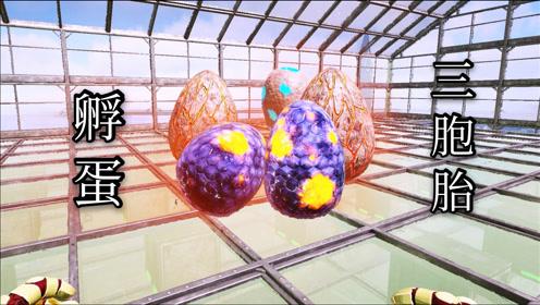 方舟灭绝22:孵了一大堆蛋,遇到了罕见的三胞胎!