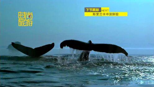 斯里兰卡篇 出海印度洋寻找白鲸