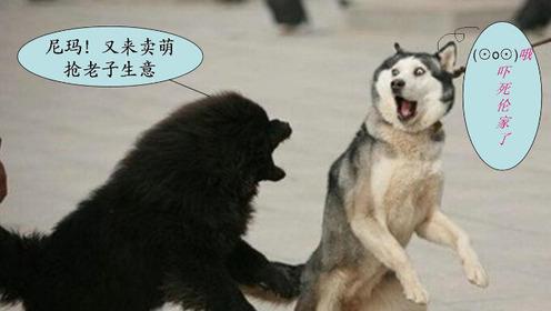 动物搞笑视频集锦,动物轻松时刻