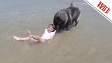小主人海边玩水险被浪头卷走 大狗一口叼住拖回