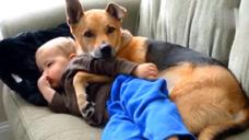 宝宝在沙发上休息,狗狗在一旁抱住小主人,这画面太有爱了
