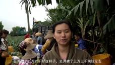 菠萝六毛六一斤,一天卖了五万多斤,三万多块钱也就是保本而已