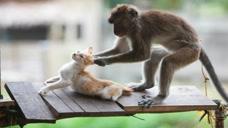 猴子也爱撸猫,镜头拍摄猴子的多种撸猫姿势