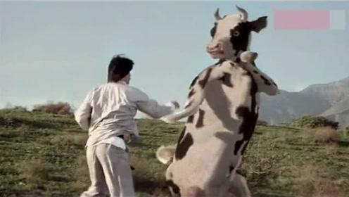 奶牛和人打架,打架过程太搞笑,哈哈!