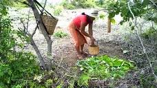 嫂子野外寻找纯天然樱桃,适合夏季吃的美味水果,摘了一大篮子