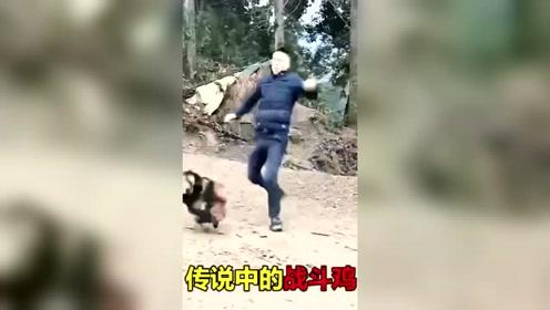 请看这个动物的搞笑视频,真是笑死人了