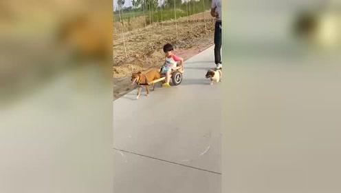 现在的小孩不得了,家庭地位一目了然,狗子的